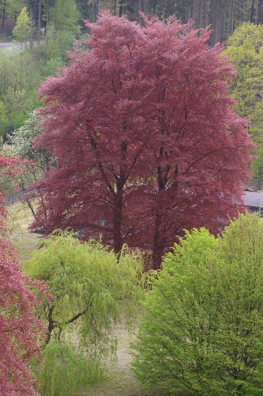 Roter Baum