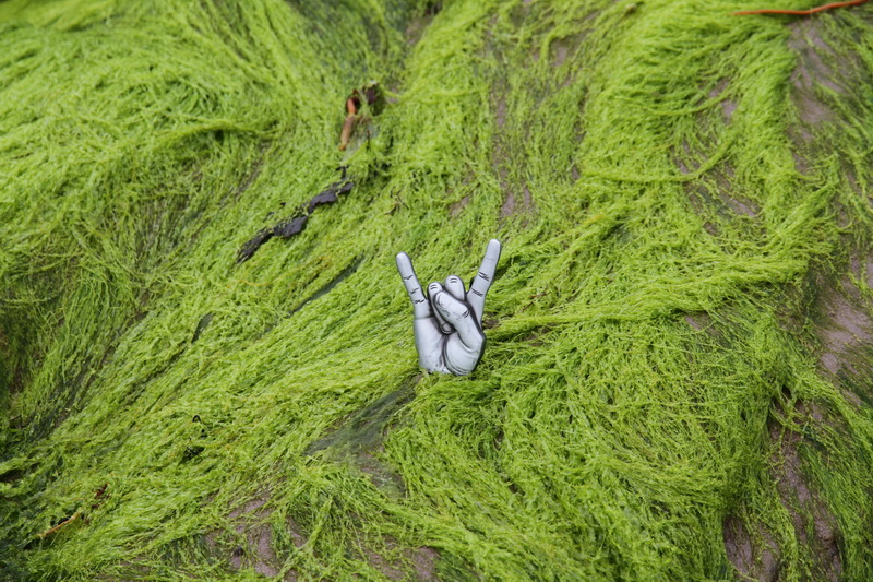 Green alga @ Derrynane Beach Ireland